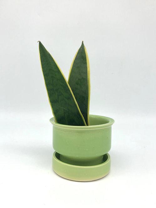 Oona Planter in Wasabi