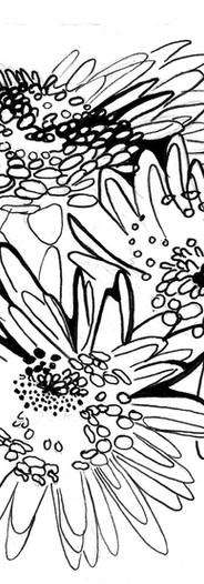 ChrysanthemumsJenny Hutchinson Art