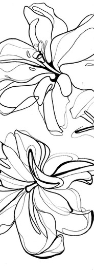 Lilies_Jenny Hutchinson Art