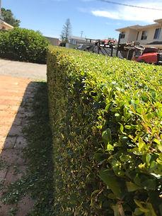 Lawn Mowing Hedhe Trimming