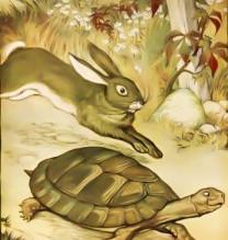 Getting out of Lockdown: Hares v Tortoises