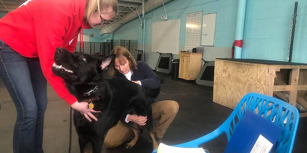 Canine Chiro with Dr. Gretchen Ham (1)