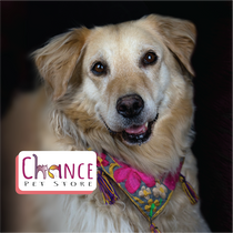 Chance Pet Store