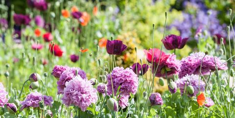 types-of-flowers-1520214627