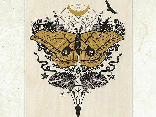 Giant Silk Moth Wood Print