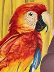 parrot detail fine.jpg