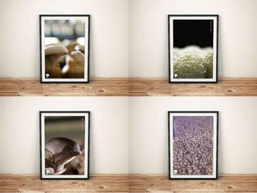 明日はきのこを食べようプロジェクト ポスター