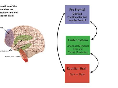 Our Emotional Brain