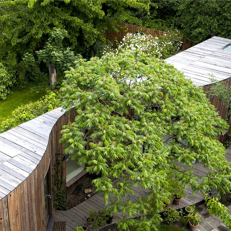 7 Formas de integrar árvores a uma casa