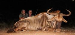 David Easom (Golden Wildebeest)