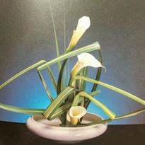 callas and flax.jpg