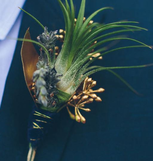 air plant with gold trims bout.JPG