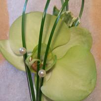 Green Phalenopsis Ochid.jpg