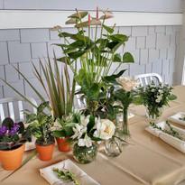 assorted plants.jpg
