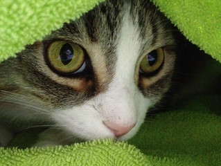 Does Your Cat Suffer From Pandora Syndrome?