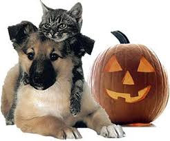 5 RULES YOUR PET WANTS YOU TO OBEY ON HALLOWEEN