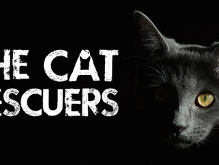 The Cat Rescuers Film To Launch Kickstarter Campaign On April 24, 2017