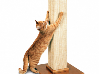 IF YOU THINK CATS ARE EASY YOU'RE DOING IT WRONG Part 3 – No, cats cannot be left alone for days at