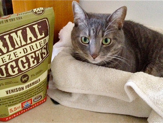 New Primal Freeze-Dried Venison For Cats