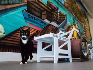 America's First Permanent Cat Cafe Opens in Oakland, California