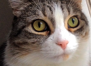 IF YOU THINK CATS ARE EASY YOU'RE DOING IT WRONG Part 2 – Enrichment and Every Day Life