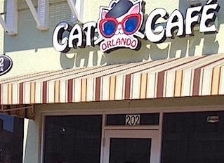 A FABULOUS DAY AT THE ORLANDO CAT CAFÉ
