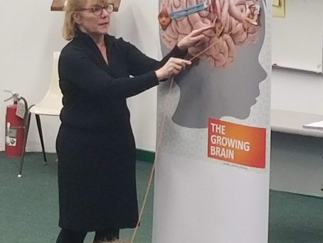 Training our Brains at the February Saturday Session