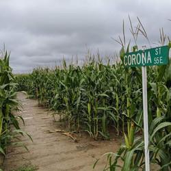 Labyrinthe Corona Street