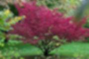 spindle flowers.jpg