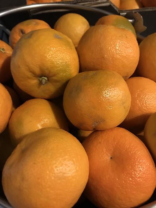 Seville Oranges 2kg