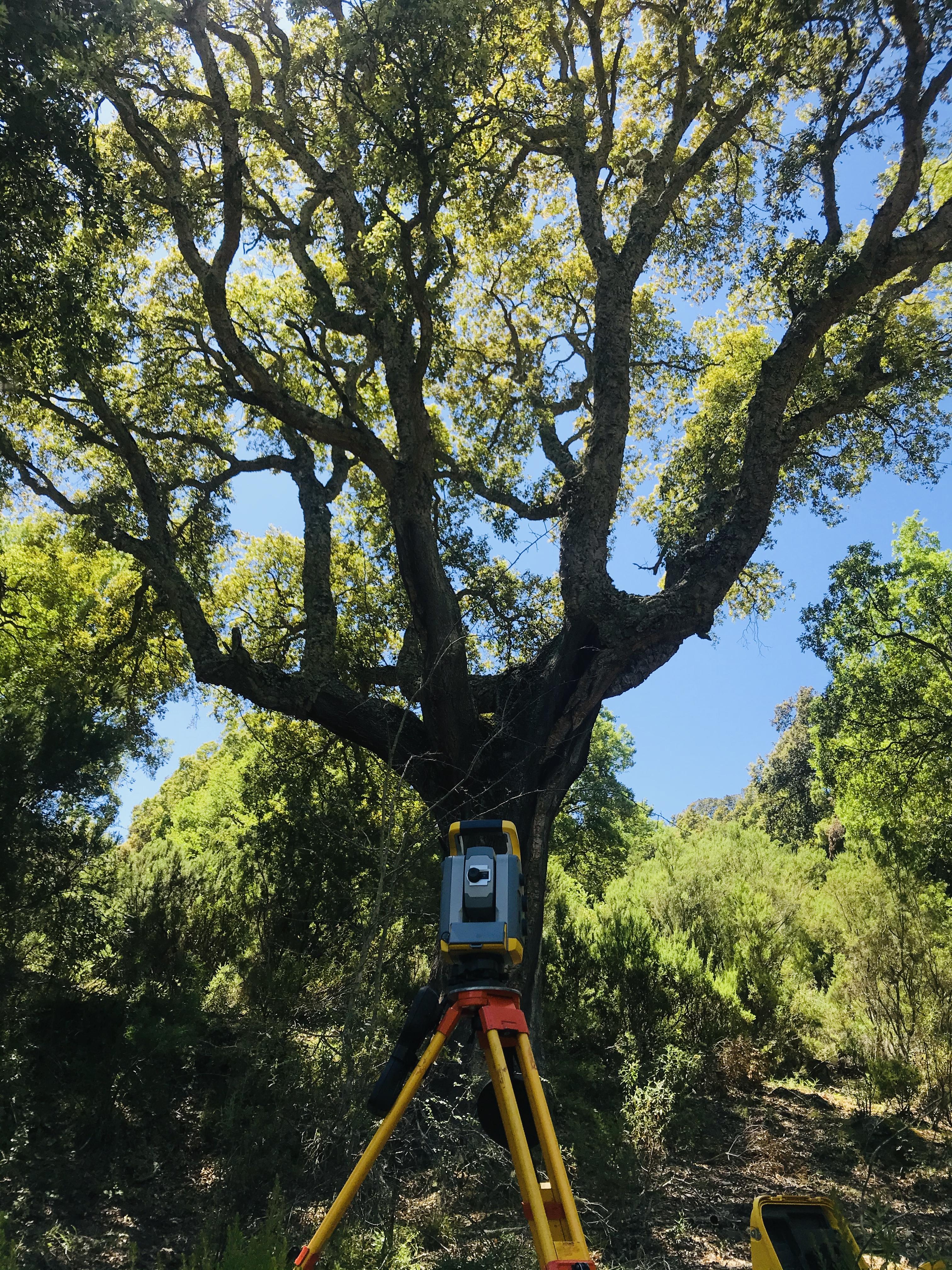 BIGORNO Géomètre-Expert Corse