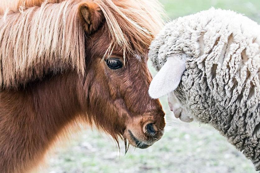 Frances and sheep.jpg