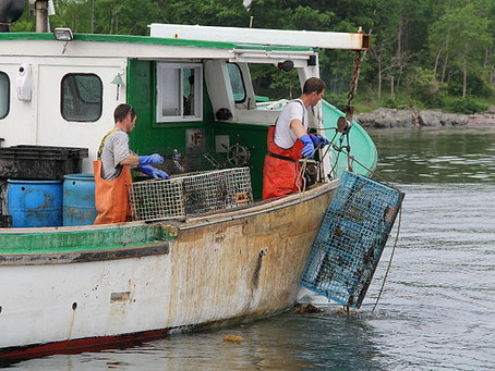 Saving Maine: The Heart of America's Lobster Industry