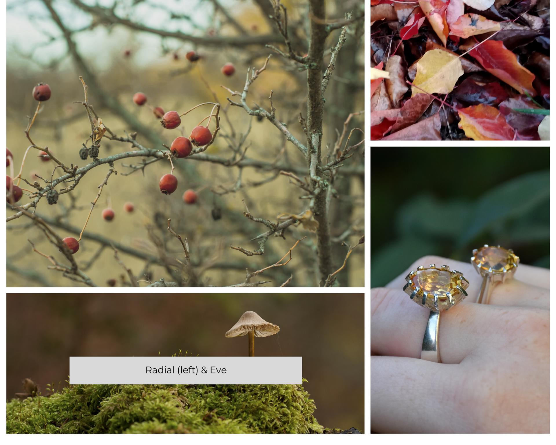 Radial & Eve Rings