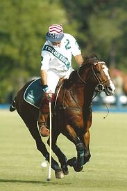 Polo Playing Stallion