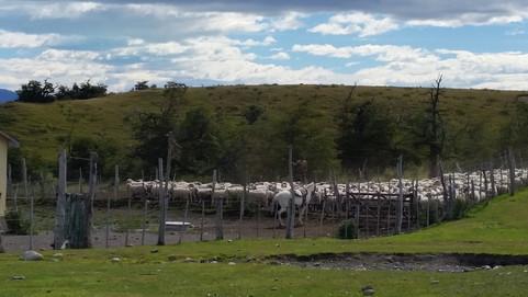 Día de Campo en la Estancia Nibepo Aike   El Calafate