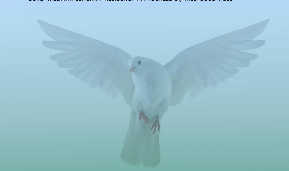 dove_183786569_1000.jpg