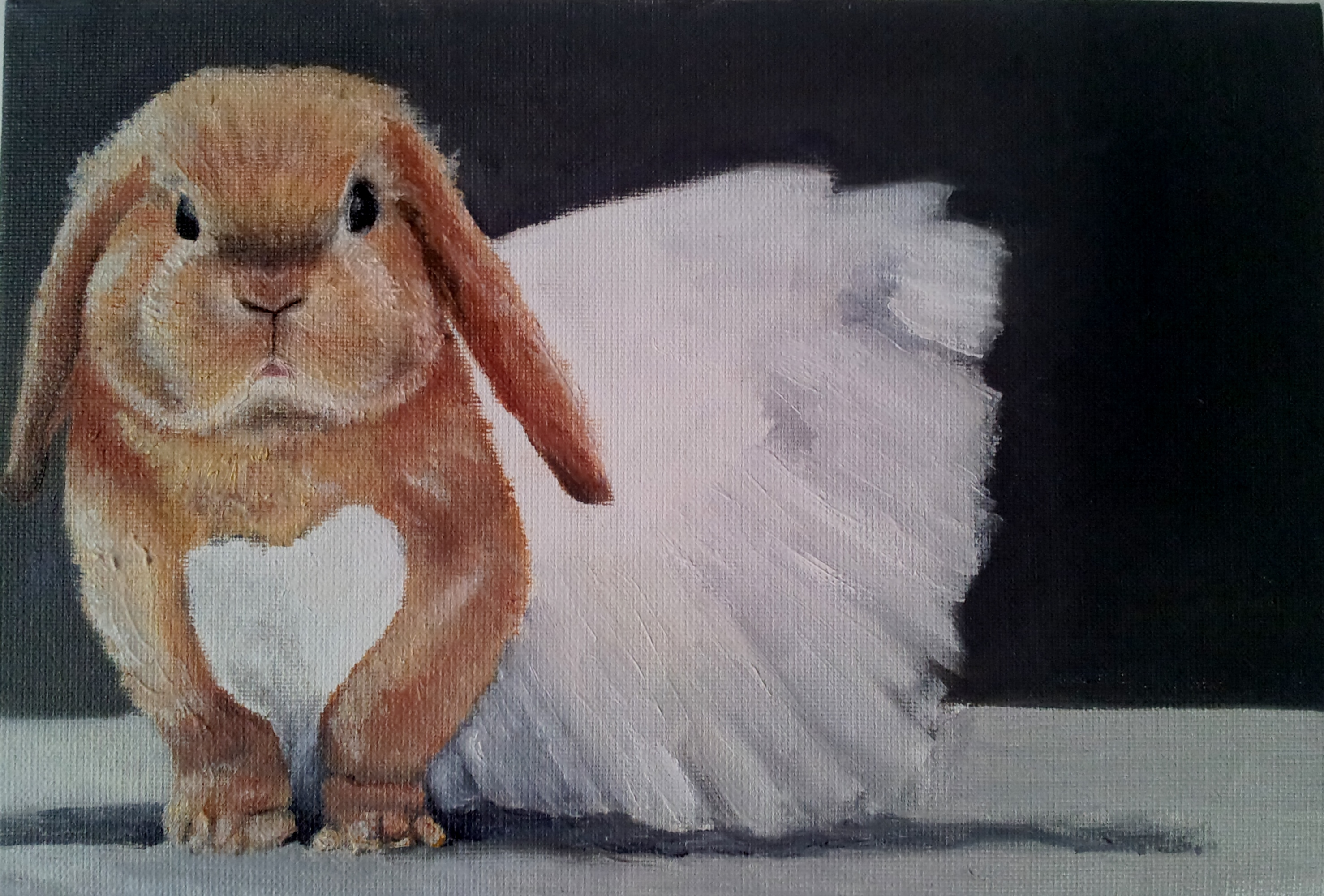 weddding rabbit.jpg