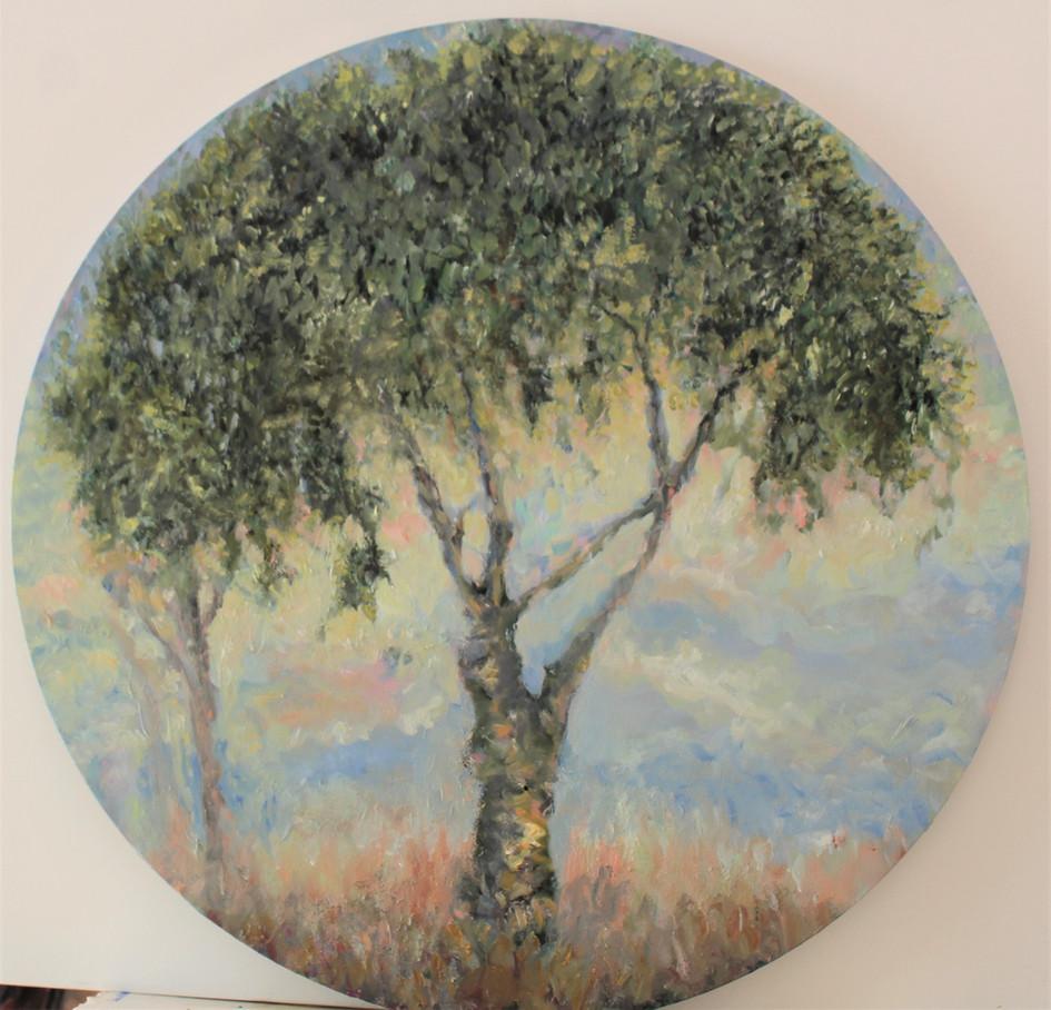 olive tree2.jpg