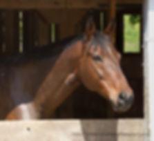 horse33a.jpg