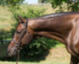 horse50a.jpg