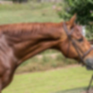 horse67.jpg