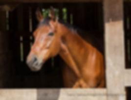 horse10a.jpg