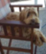 Rosie (5)_edited.jpg