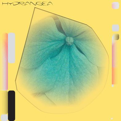 HYDRANGEA - LP Cover - Design by Metahaven