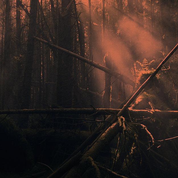 God rays in fog - Horiz 2.jpg
