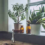 indoor plant care outdoor plant care