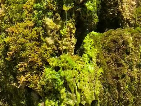 Spaziergang an der Aare