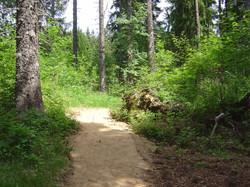 Seniters forêt Mont-Mouchet