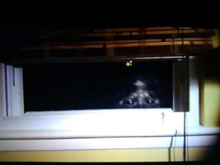 Window Peeking Bigfoot in Bailey